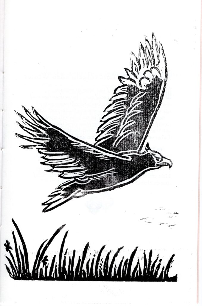 Hand-cut lino print image of an eagle in flight above grass or reeds. Black ink on white paper